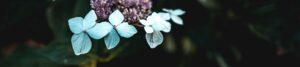"""Motto-Bild mit ersten Blüten zur Illustration der Rubrik """"Aktuelles"""" auf dem Blog der Berliner Paartherapeutin Julia Bellabarba"""