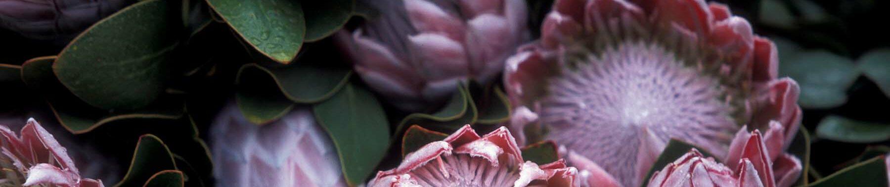"""Motto-Bild mit gefrorenen Blüten zur Illustration der Rubrik """"Aktuelles"""" auf dem Blog der Berliner Paartherapeutin Julia Bellabarba"""