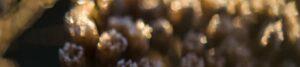 Dunkle Blüten als Themenbild für den Blog der Berliner Paartherapeutin Julia Bellabarba